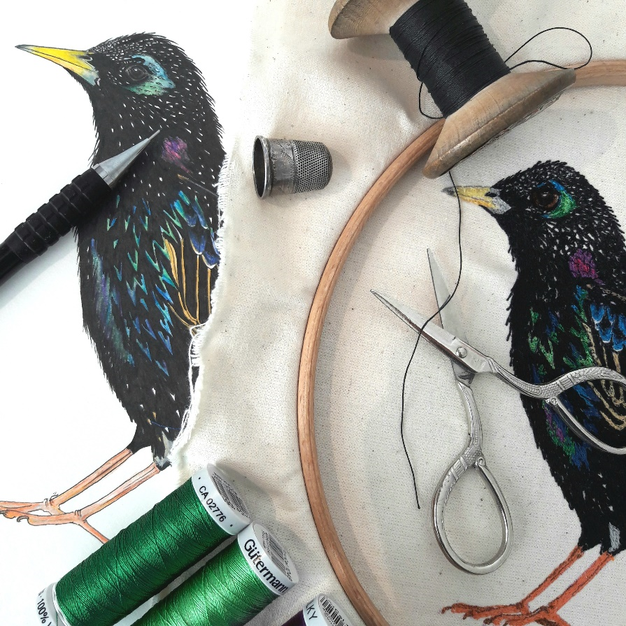 Starling, stages of development